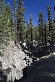 foto of mammoth  - Beautiful natural scenery around Mammoth Lakes in California with trees and a blu sly - JPG