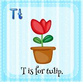 foto of letter t  - Flashcard letter T is tulip - JPG