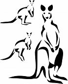 stock photo of wallabies  - wallaby  - JPG