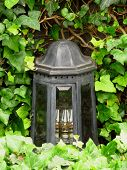 picture of ivy  - Old lantern on the grave covered with green ivy - JPG