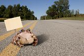 stock photo of sticks  - Fat toad sitting on a lonely country road - JPG