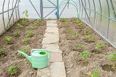 image of early spring  - the arch of the greenhouse tomato seedlings in early spring - JPG