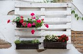 picture of wooden pallet  - White storage industrial pallet used in gardening for a wall decoration as a shelf for flowerpots and other objects - JPG