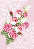 image of white roses  - illustration with pink and white roses design - JPG
