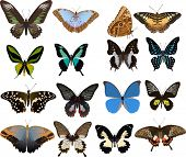 illustration with sixteen color butterflies isolated on white background