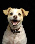 stock photo of happy dog  - A portrait of a cute - JPG