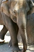 Elefanten Wandern