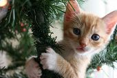 Ginger Kitten Up A Christmas Tree