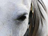 Grey mares face