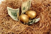foto of nest-egg  - A nest with golden eggs and lined with paper money - JPG
