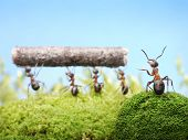 ants teamwork management