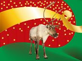 stock photo of caribou  - Fun Christmas or Holiday card or others with a complete reindeer or caribou on funky red and green background with gold stars and ribbon for your text - JPG