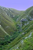 pic of fynbos  - A gloomy picture of a small valley in the mountains