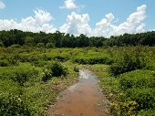 Small Creek Or River And Mud In A Wetland Area poster