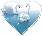 Romantic swans couple in a heart shape. Vector illustration for Wedding invitation