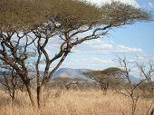 African Landscape 1
