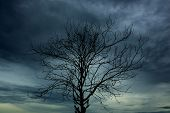 Branch Of Dies Tree And The Sky Have Overcast Many Cloud poster
