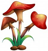image of portobello mushroom  - illustration of red mushrooms on a white background - JPG