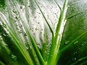 Leaf Waterdrops