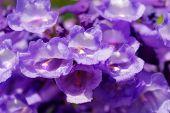Mesquite Flowers