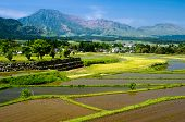 Rice field in front of mountains