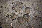 Beast Footmark