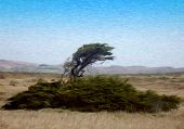 Tree On A Windy Coast