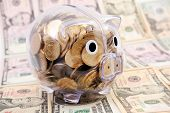 Savings in piggy bank  on the background dollars banknote