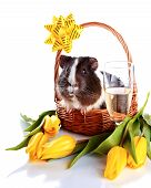 Guinea Pig In A Basket With A Flowers And A Champagne Glass.