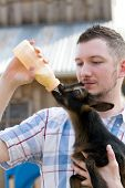 stock photo of baby goat  - Man bottle feeds a baby Nigerian Dwarf Dairy Goat kid on a farm - JPG