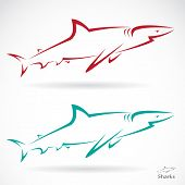 Vector illustration of shark banner