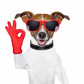 picture of numbers counting  - ok fingers dog with red gloves and glasses - JPG