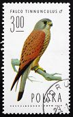 Postage Stamp Poland 1975 Common Kestrel, Falcon