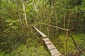 Einfache Brücke in einem Regenwald-Teich