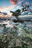 Sunrise Over Reef Island.