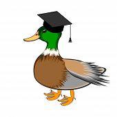 A Funny Duck In A Graduation Cap