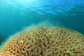 picture of spawn  - Coral spawning underwater - JPG