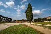 Cypress Tree On Circus Maximus, Ancient Roman Stadium Near Palatine Hill, Rome, Italy