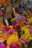 Baskets Of Zinnias And Statice At Farmers Market
