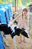 foto of calf cow  - Happy little girl strokes black and white calf at cow farm at summer day - JPG