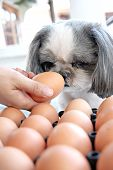 The Dog Watching Egg.