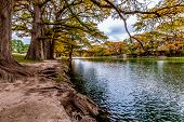 Beautiful Cypress Trees with Fall Colors at Garner State Park, Texas