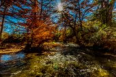 Sunburst of Beautiful Fall Foliage On The Guadalupe River, Texas.