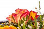 Background Of Vivid Orange Roses