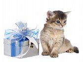 Cute Somali Kitten Sitting Near A Present Box