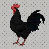 stock photo of roosters  - Realistic black rooster on a gray flyspecked background - JPG
