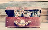 pic of tabby cat  - Cute kittens are sitting in vintage suitcase on a wooden background - JPG