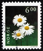 Postage Stamp Norway 1997Oxeye Daisy, Flowering Plant