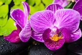 Spa Still Life Of Stripped Violet Orchid (phalaenopsis), Green Branch Of Maidenhair, Zen Stones With