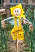 picture of scarecrow  - Garden scarecrow standing amongst onion plants in a garden or allotment - JPG